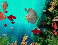 Screensavergift – Coral Reef Aquarium 3D Animated Wallpaper Coupon Code